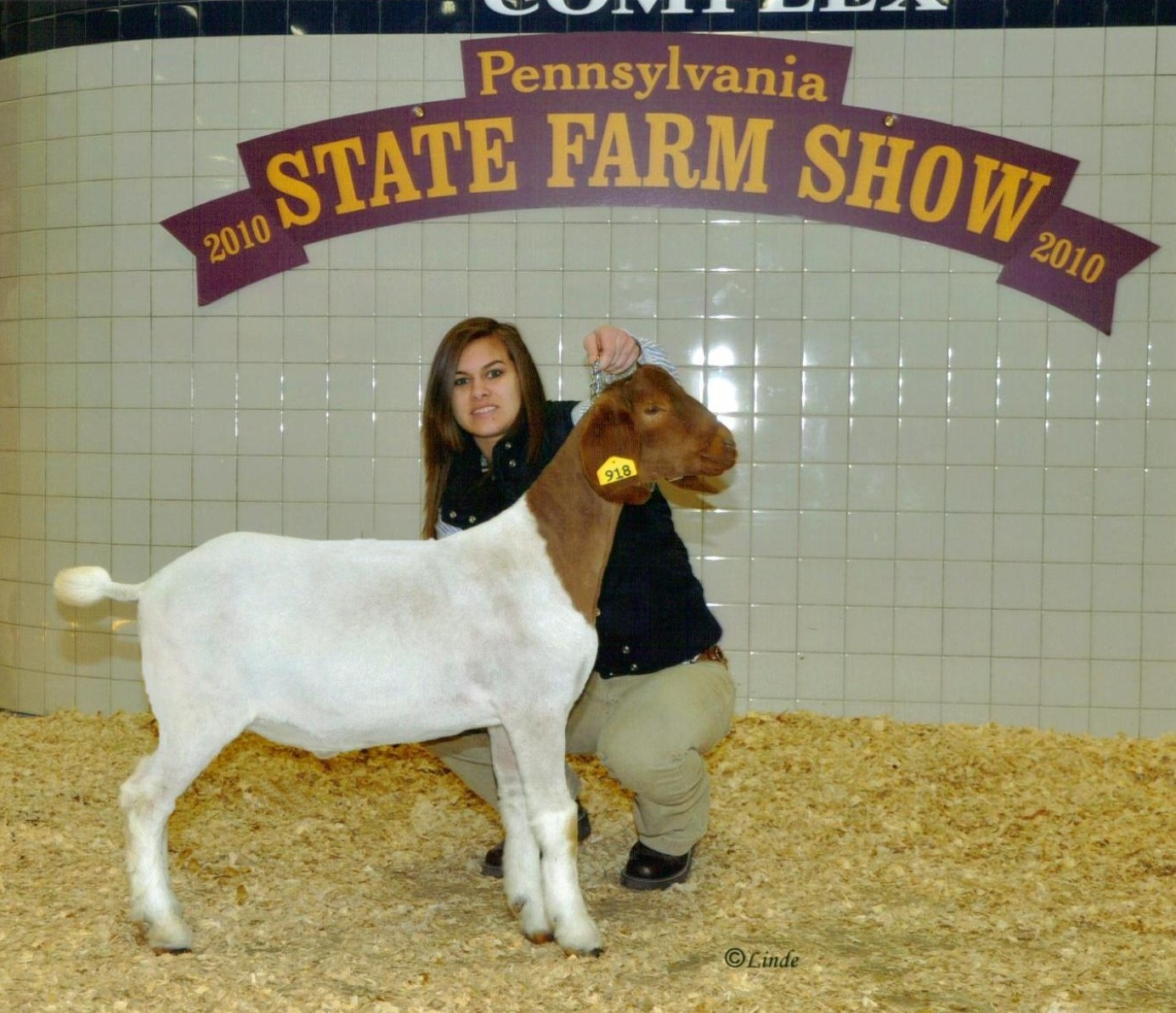 Boer Pygmy Goats For Sale In Pa Show Pictures